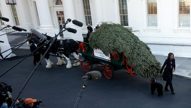First lady Michelle Obama receives the Official White House Christmas Tree.