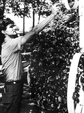 1990: Billy Hettmann of Colts Neck works as a landscape foreman at Six Flags Great Adventure.