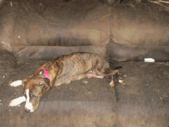 A woman was charged with 60 counts of animal cruelty
