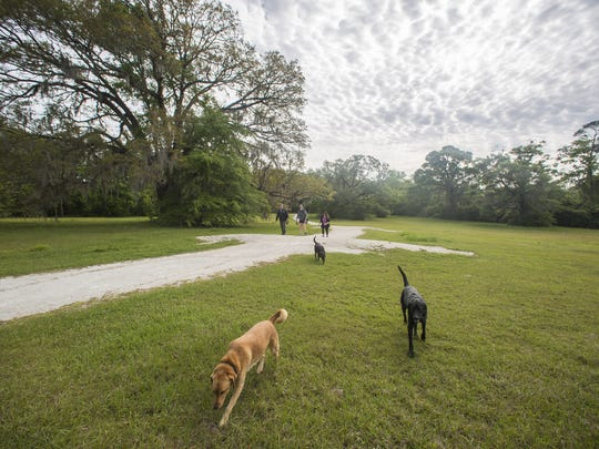 The Miccosukee Greenway, which spans 6.5 miles, is enjoyed by residents who like to walk their pets.