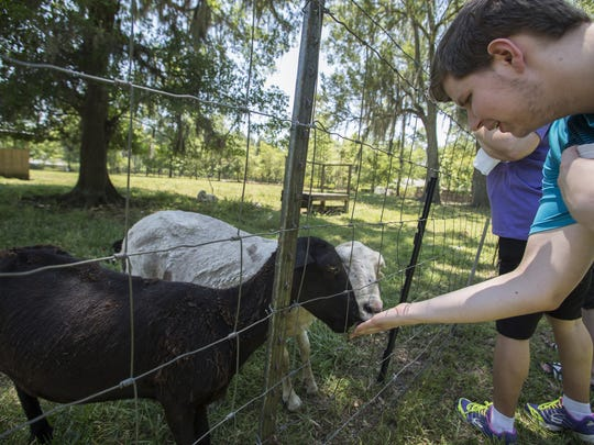 Festival goers feed the katahdin sheep during Mayhaw Berry Harvest Festival at Golden Acres Farm on May 8, 2016.