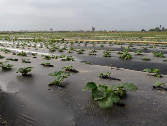 crop-report5.JPG