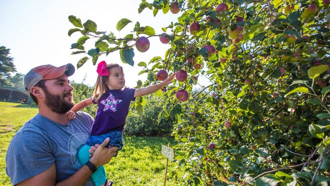 Visitors pick apples at an orchard in Hendersonville, North Carolina.
