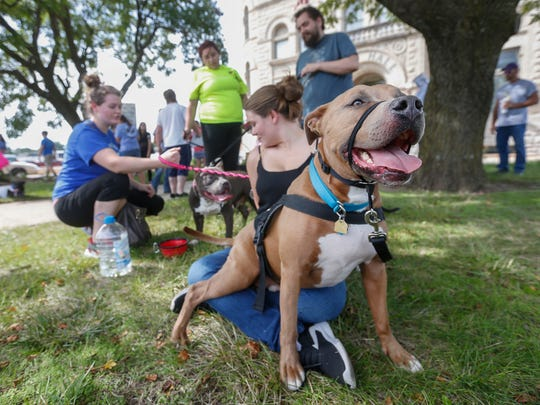 """Blue sits on Amber McBride's lap during the """"Don't Bully My Bully"""" rally in front of city hall on Friday, August 25, 2017. Blue is McBride's service dog and helps her with her panic attacks."""