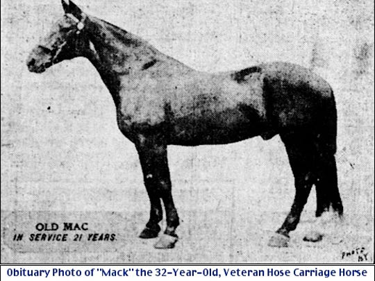 "Obituary Photo of ""Mack"" the 32-Year-Old, Veteran Hose Carriage Horse of Rescue Fire Company in York, PA (The York Daily, Dec. 4, 1911, Page 3)"