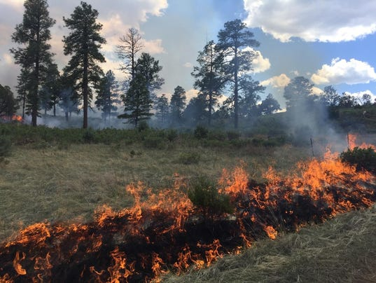 Fire line in Lincoln National Forest