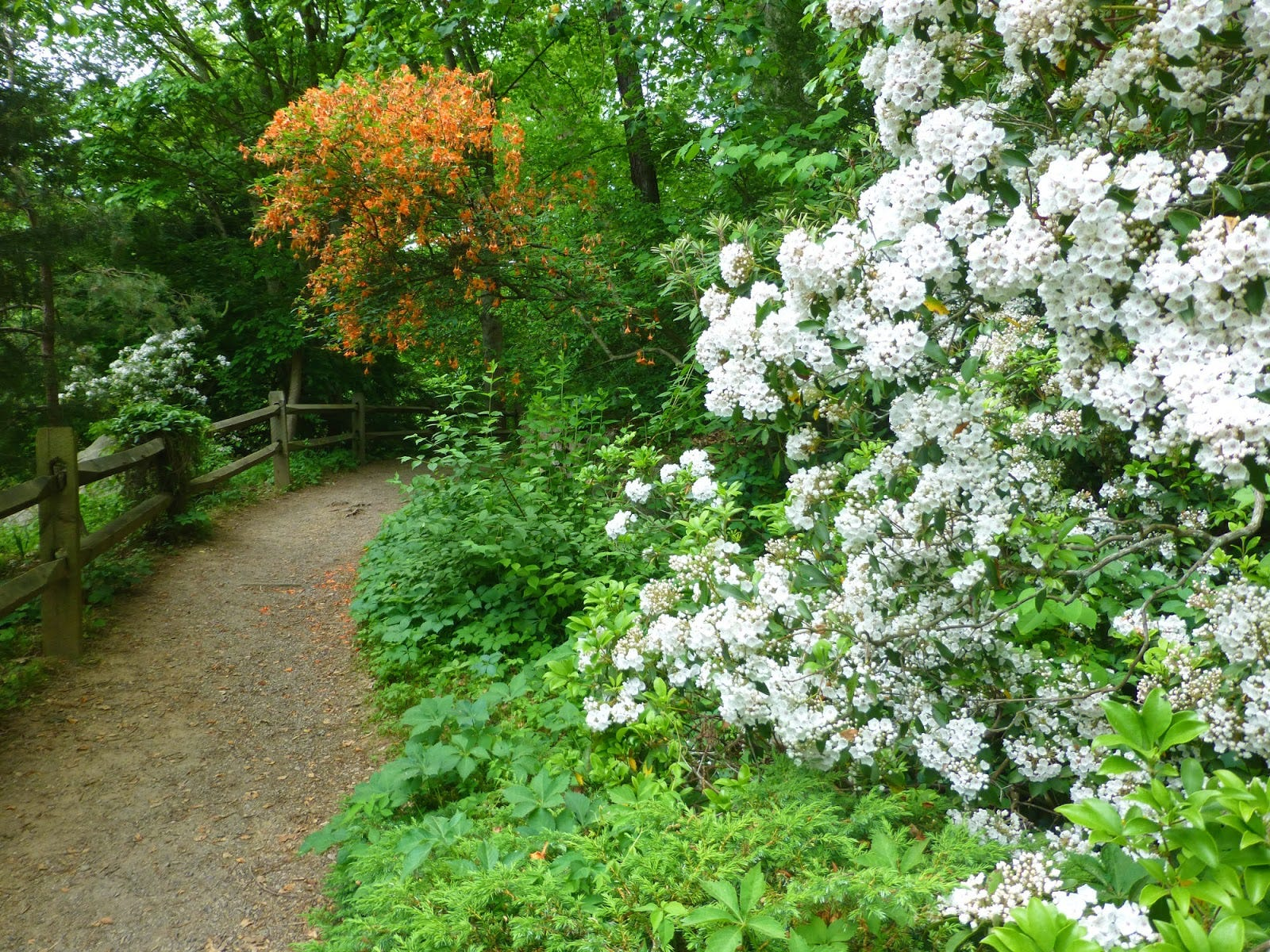 635968355894250822 Asheville Botanical Gardens
