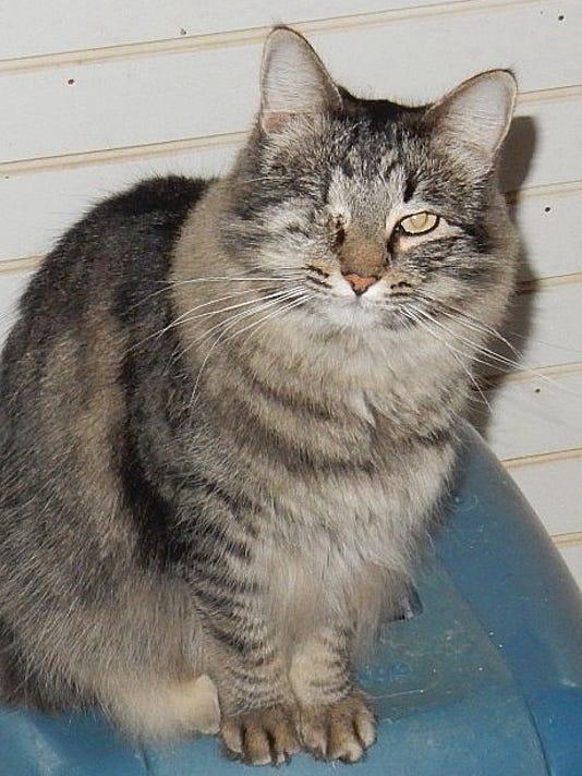 Pets-SCH-011517.jpg
