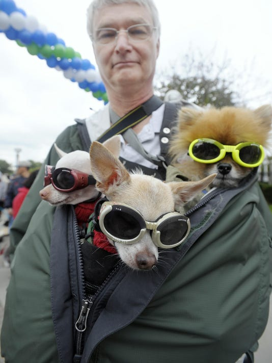 dogs-glasses