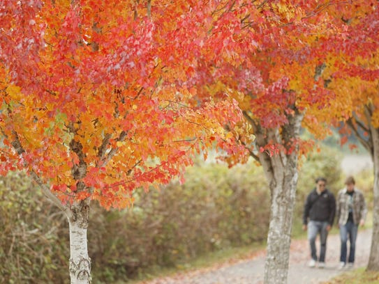 Trees display their fall colors along Minto Island Road in the Minto-Brown Island Park on Oct. 26, 2011.