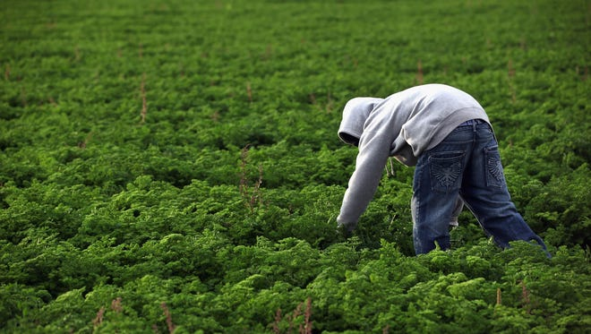 The American Farm Bureau Federation study says said that fruit and vegetable growers would be among the hardest-hit in changes to agricultural labor reform focusing solely on immigration enforcement.