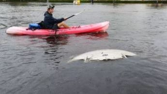 Where cars dare not venture, there are alternative ways to get around after five days of heavy rain in Lee County.