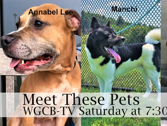 "York County SPCA's ""Meet the Pets"""