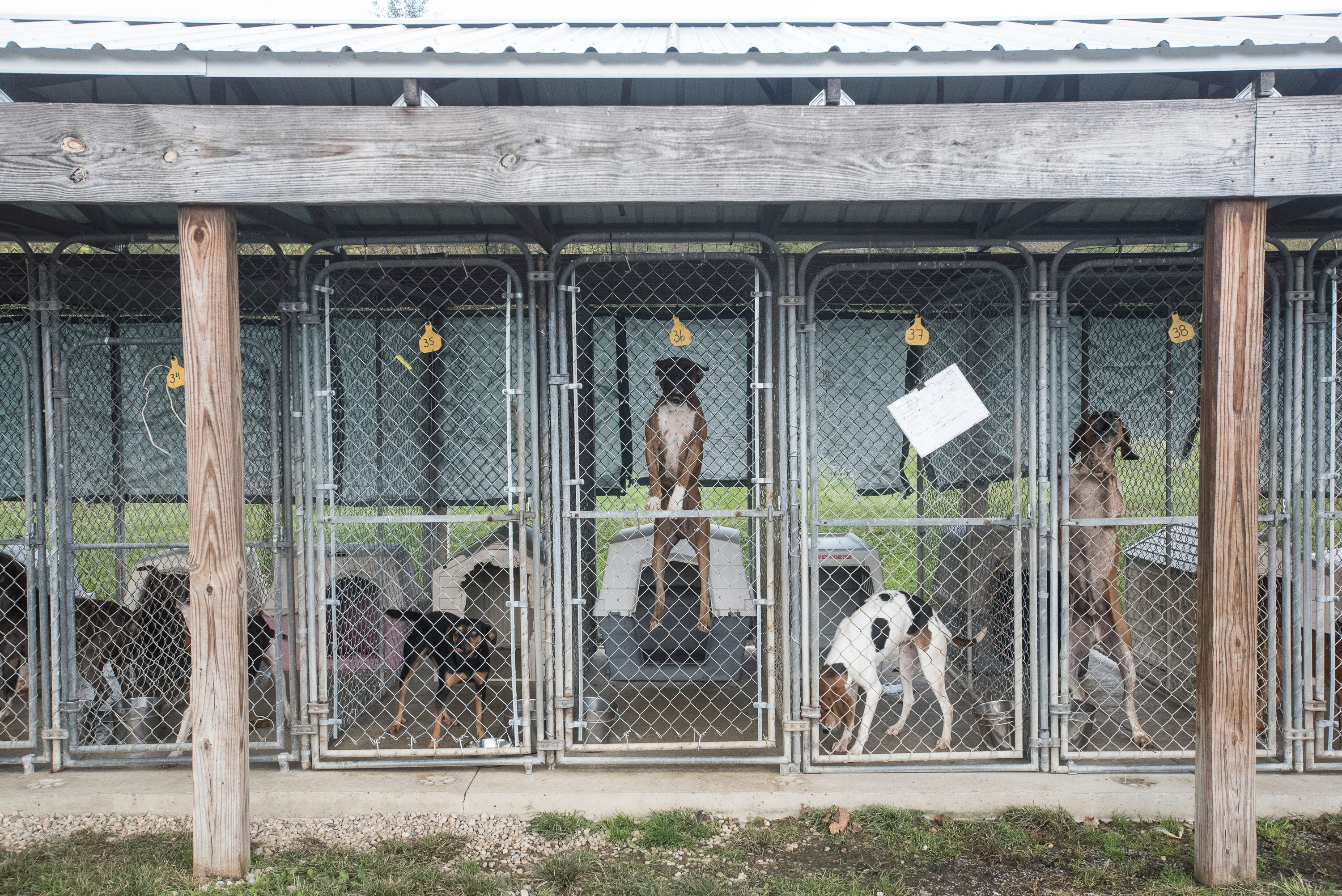 Image of: County Humane Ross County Humane Society At Critical Capacity Lowering Adoption Fee