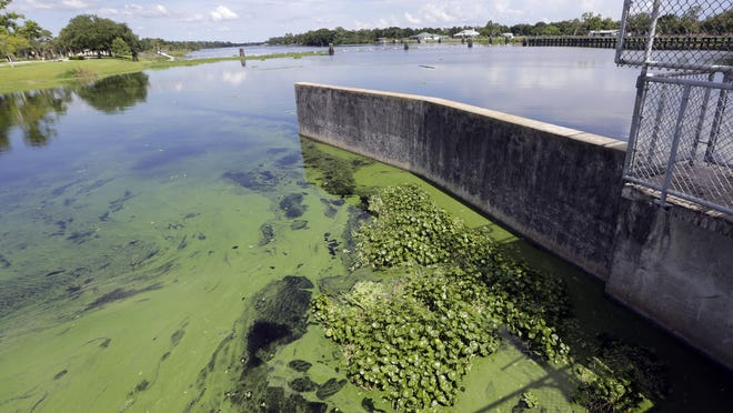 An algae bloom is on the Caloosahatchee River at the W.P. Franklin Lock and Dam in July 2018.