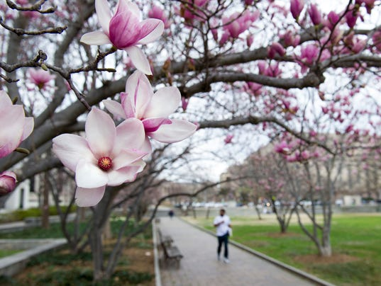 Early Spring Warmth Wreaks Havoc On Plants Allergies Bugs