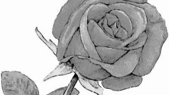 300 dpi 2 col x 6.25 in / 96x159 mm / 327x540 pixels Ric Thornton color illustration of a red rose. Macon Telegraph 2005  <p>  KEYWORDS: rose flower love krtfeatures features garden gardening valentine's day valentine amor flor rosa dia  san valentin krtnational national krtnature nature krtworld world krtgarden aspecto aspecto jardin  krtholiday holiday krtvalentine krtwinter winter risk diversity woman women krt illustration ilustracion  grabado aspecto aspectos ma contributed coddington thornton 2005 krt2005