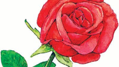300 dpi 2 col x 6.25 in / 96x159 mm / 327x540 pixels Ric Thornton color illustration of a red rose. Macon Telegraph 2005  <p>  KEYWORDS: rose flower love krtfeatures features garden gardening valentine's day valentine amor flor rosa dia  san valentin krtnational national krtnature nature krtworld world krtgarden aspecto aspecto jardin  krtholiday holiday krtvalentine krtwinter winter risk diversity woman women krt illustration ilustracion  grabado aspecto aspectos ma contributed coddington thornton 2005 krt2005