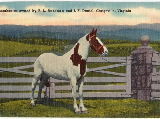 Pocahontas horse
