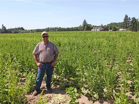 Robert Purdy stands in his field of genetically engineered sugar beets near Salem in this file photo.
