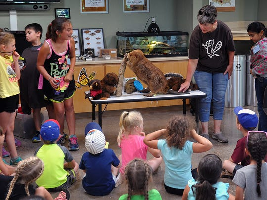 Lynn Seman explains the different parts and characteristics of the North American beaver as she conducts part of the Crazy 'Bout Critters camp Monday morning at River Bend Nature Center.