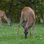 There are plenty of deer and turkey tags left to purchase