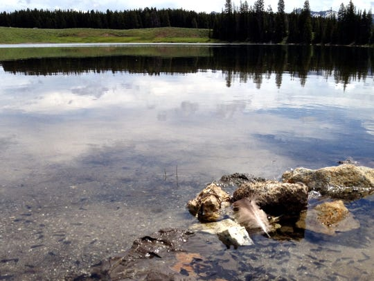 Tadpoles in Indian Pond, Yellowstone National Park