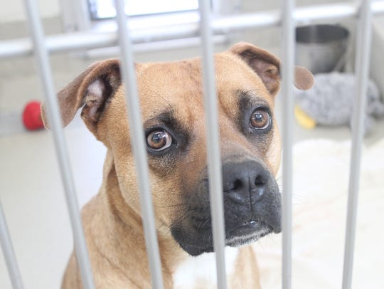 The Animal Care and Adoption Center is offering shelter