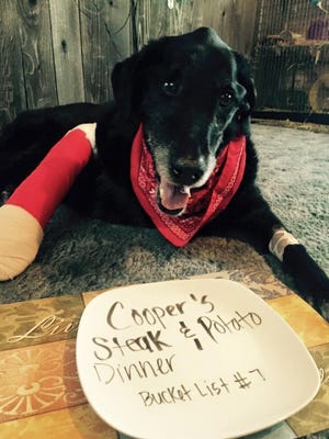After Cooper, a 13-year-old black Lab, was diagnosed with cancer, his owners made him a bucket list that included a steak and potato dinner.