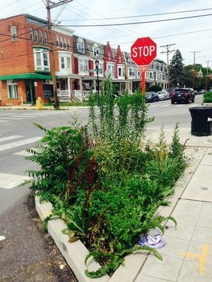 The improvements to Jackson Street a few years ago included planting areas at intersections.