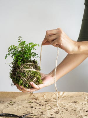 """Making Japanese moss balls is covered in """"Urban Jungle."""""""
