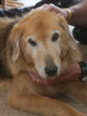 Andy, a 13-year-old Shepherd mix in Brick, has a genetic disease similar to ALS.