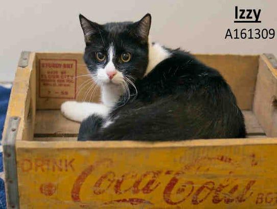 Little kitten Izzy, ID A161309, is an 8-month-old black