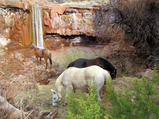 Three of the trail riding party's horses enjoy a respite