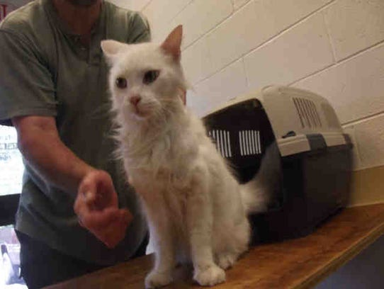 Rascal, ID A166269, is a 14-year-old neutered domestic