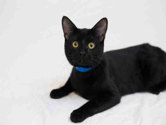 One-year-old Edgar, ID A169640, may mesmerize you with