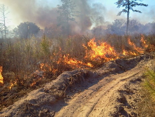 Setting a fire from a fireline during a prescribed