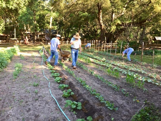 Leon County Master Gardener trainees in action at the