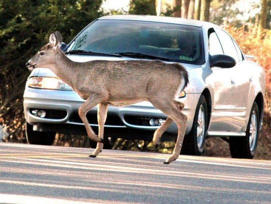 Cars crash into deer more than 4,000 times a day, and