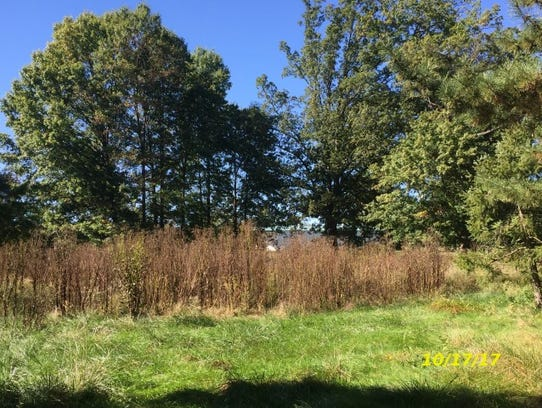New Castle County code inspectors took this photograph of high grass growing from the closed Brandywine Country Club. Various property maintenance violations on the land have led county regulators to fine the property owner $250 a day as plans to develop the property continue to evolve.