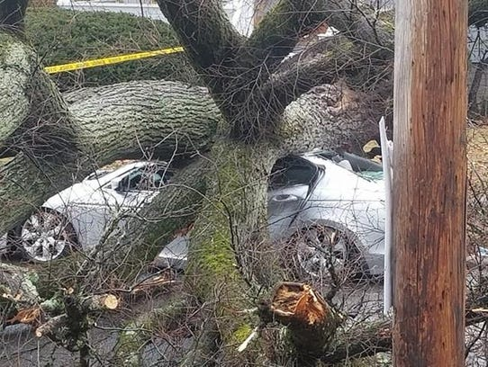 A tree fell on a car on Pierpont Street in Rahway on