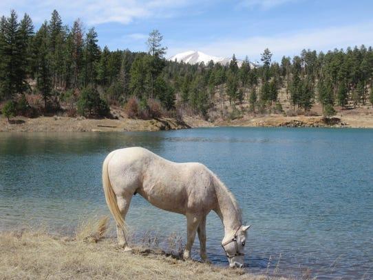 Thunder took his own spring break at the lake.