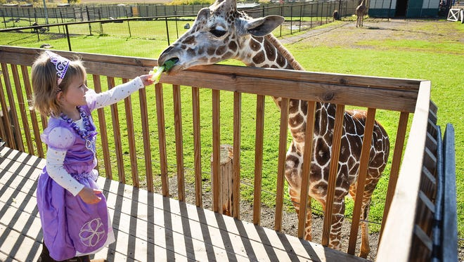 Natalie Ziwicki, 3, Foley, feeds lettuce to Prince the giraffe during Boo at the Zoo Saturday, Oct. 7, at Hemker Park and Zoo in Freeport.
