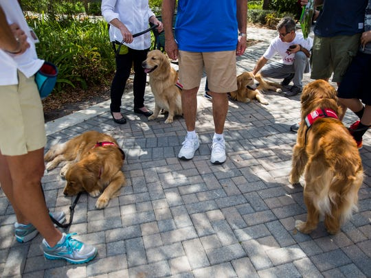 PAWS assistance dogs Jewel, from left, Rocky, Woody and Mickey wait for people to pet them at the Pine Trails Park memorials in Parkland on Monday, Feb. 26, 2018.