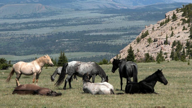 Wild horses are seen at the Pryor Mountain National Wild Horse Range in south-central Montana.