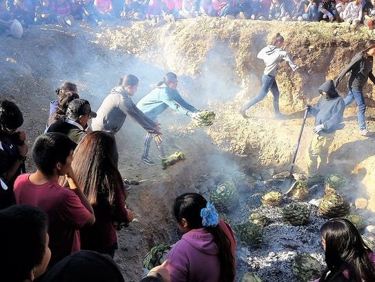 Mescalero maidens toss mescal plants into the pit.