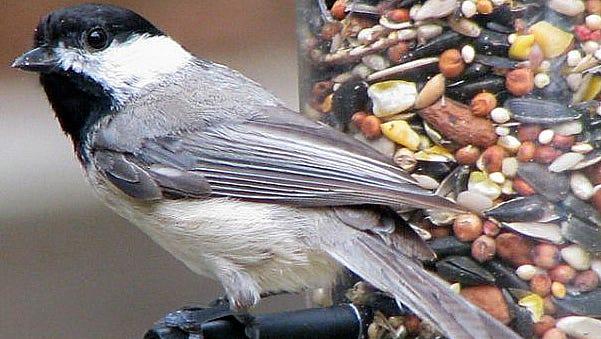 Bird feeders are now legal again.