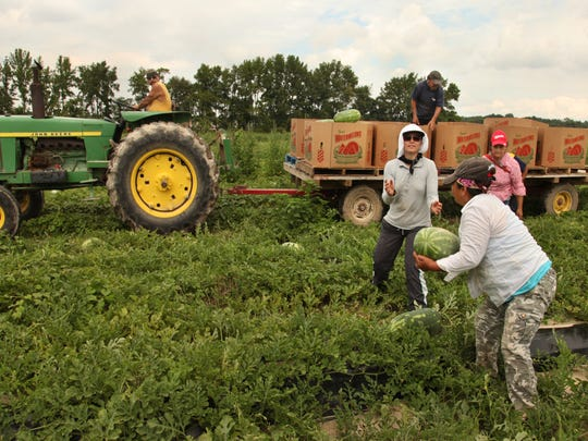 Like his father before him, the crew leader on the tractor spends his day working with his crew of men and women. Women make up 22 percent of the farmworker population nationally.