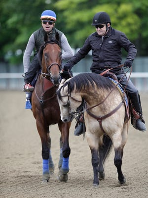 """American Pharoah, with excercise rider Joerge Alvarez aboard left the Bemont Park track after a light workout on Thursday morning.  He is being lead by assistant trainer Jimmy Barnes, aboard """"Smokey."""" June 4, 2015"""