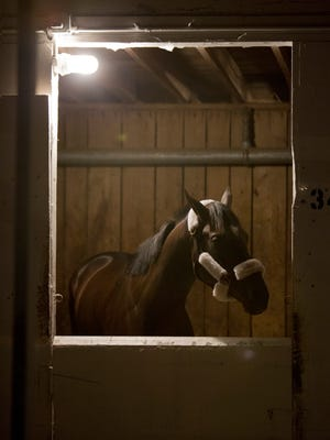 Kentucky Derby winner Always Dreaming rested in his stall before being shipped to Baltimore for the Preakness stakes. May 9, 2017.